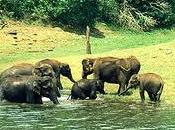 Kerala Wildlife