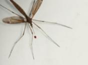 Malaria Total Buzzkill