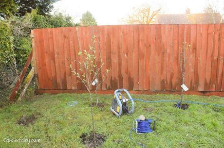 Garden makeover - new fence -5