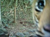 Funny Photos Wild Animals Staring Cameras