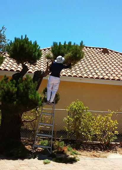 My mom tree trimming on her property.