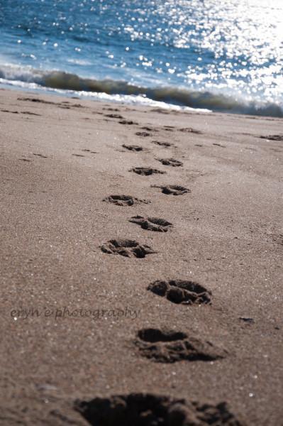Footprints to te Waters Edge WM