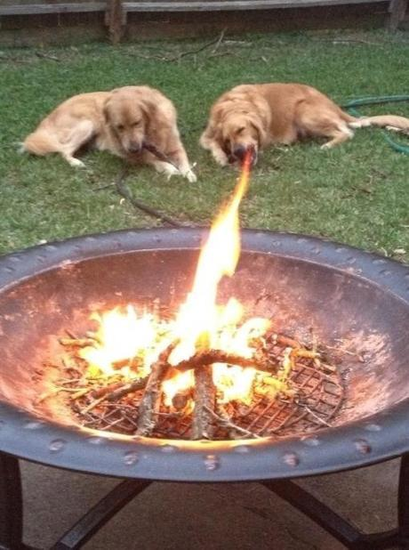 Top 10 Perfectly Timed Images of Dogs