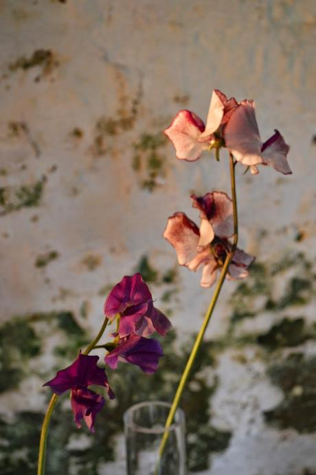 A sweet pea moment