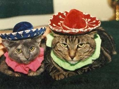Top 10 Stereotypical Cats From Mexico