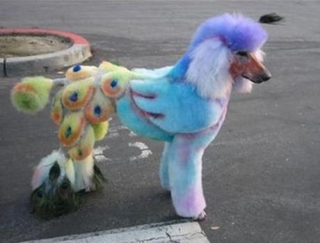 Top 10 Best Images of Poodle Doodles