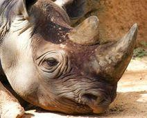 Stop South African Mine That Threatens Rhino Sanctuary  – The Petition Site