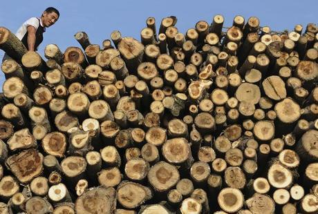 Chinas Hunger For Timber Is Wrecking Mozambique