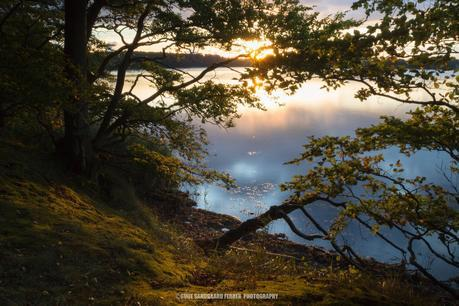 Sodoma Skov Beautiful and Dreamy Pictures of Denmark (Gallery)