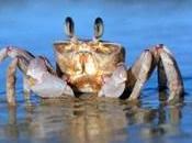 NOAA: Ocean Acidification Rises, Shells Shrink