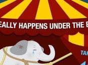 What REALLY Happens Under Top: Circuses Should Banned Immediately