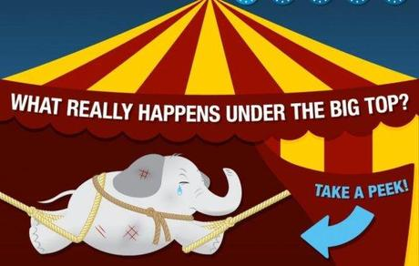 What REALLY Happens Under the Big Top: Why Circuses Should Be Banned Immediately