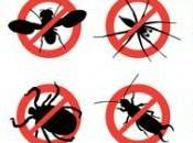 Tips Tricks Pest-proof Your Home