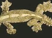 Deer Gecko
