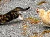 Kitten Mungil)