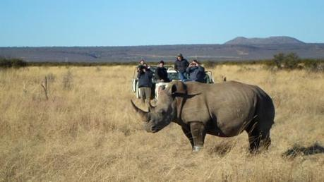 How Wearable Technology Is Helping Save Rhinos from Poachers