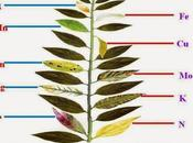 Plant Nutrient Deficiency Chart