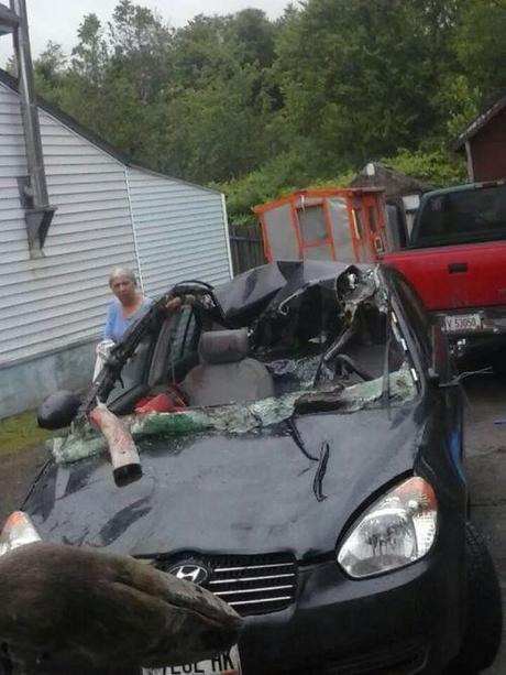 Moose vs. car6