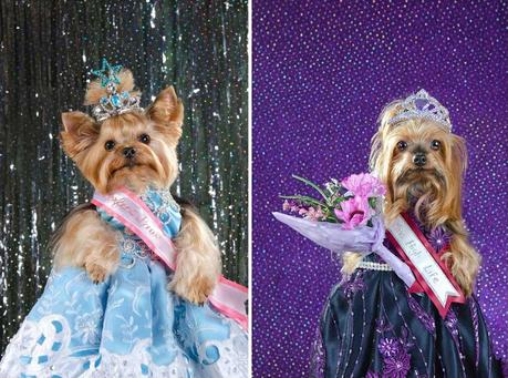dogs pose in dresses in pageant