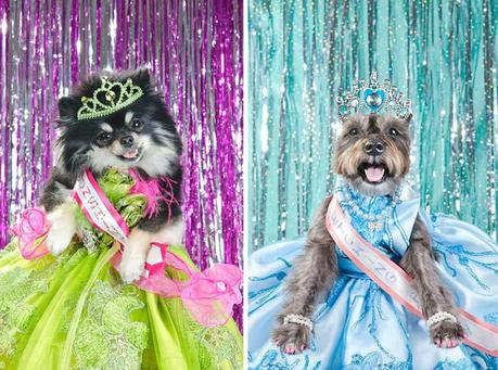 dogs dressed in pageant dresses