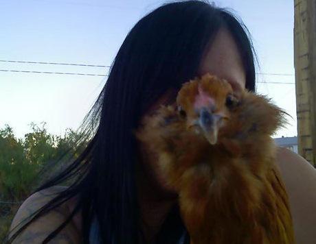 Top 10 Funny Animal Head Photobombs