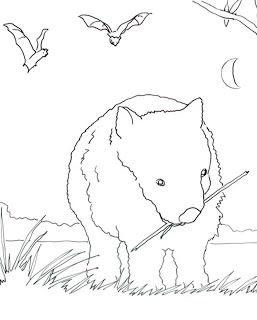 Wombat Coloring Page Paperblog