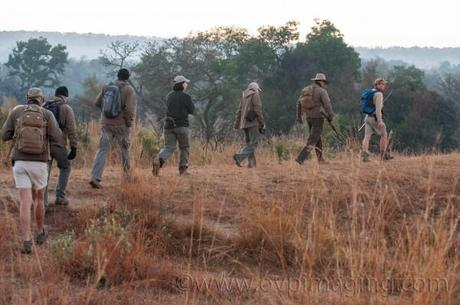Kruger Park Guided Walk during 2014 SGOTY Competition
