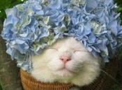 Funny Images Flowers