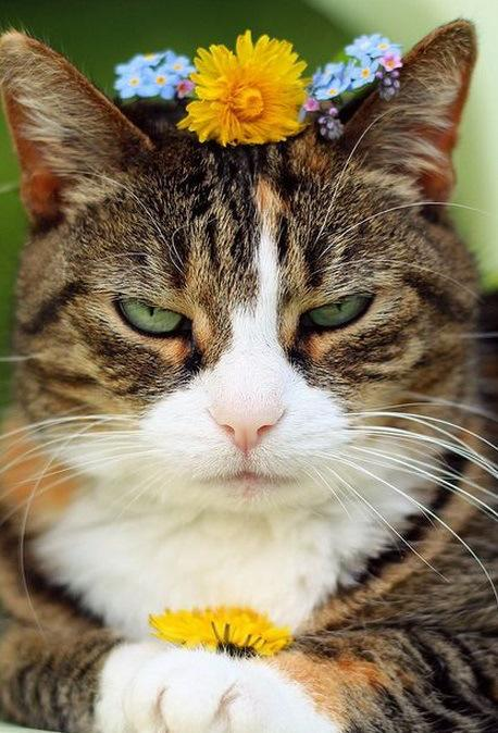 Top 10 Funny Images of Cat Flowers
