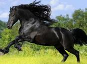 "Creation: Majestic Friesian ""war Horse"""