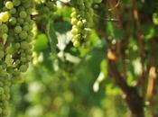 Drinking Wine: Georgian Tradition